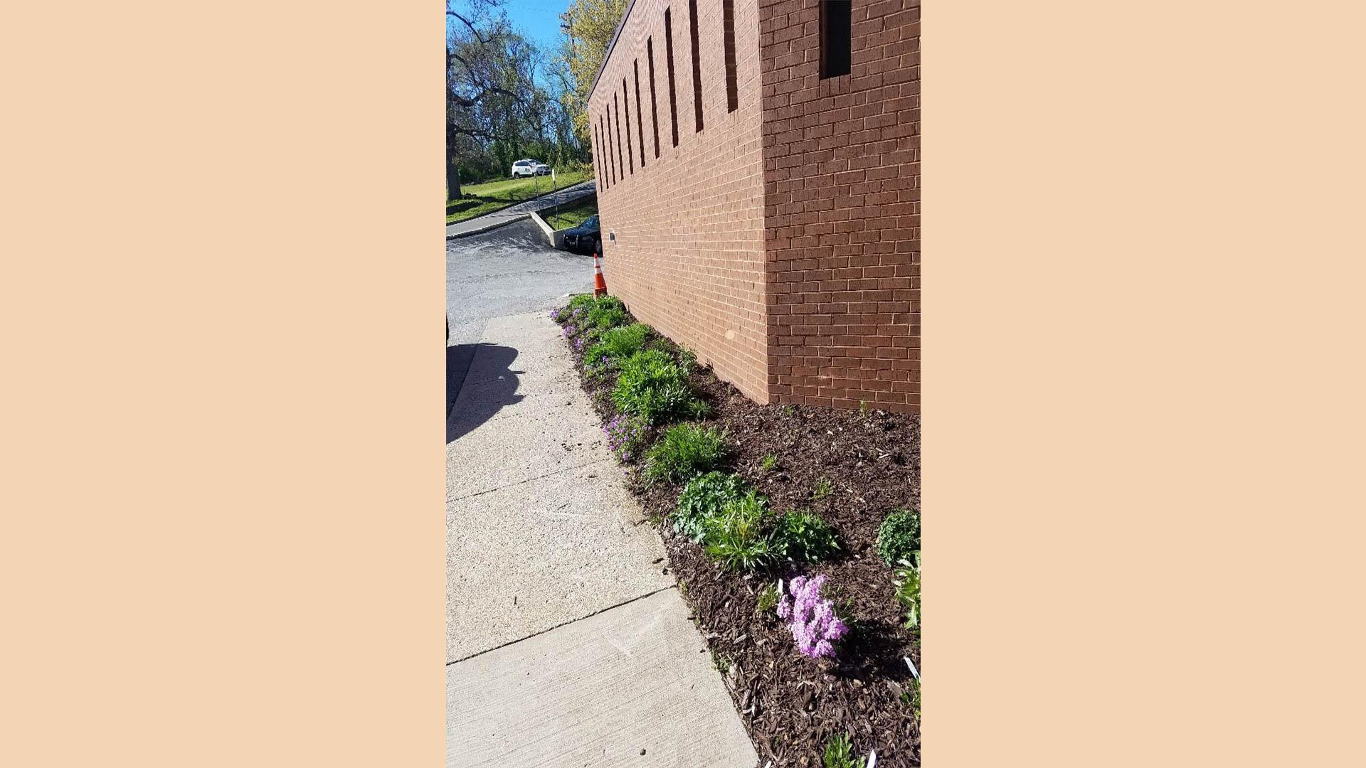 190429 Native GArden City Branson Police Side NOP - Native Gardens Plantings at City Hall Encourages Native Gardens